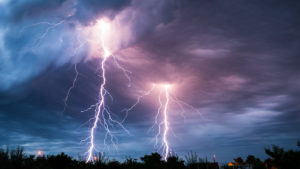 lightning trees