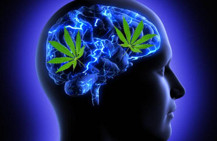 Marihuana verbessert das Gehirn